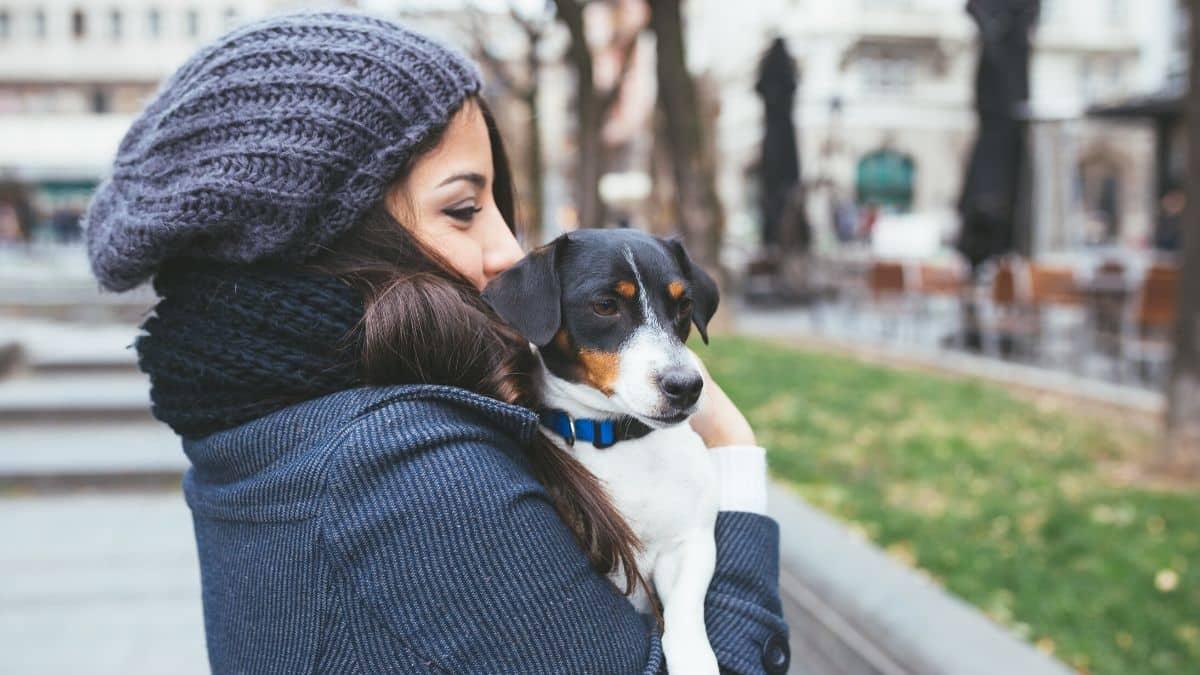 avalon blog dog friendly